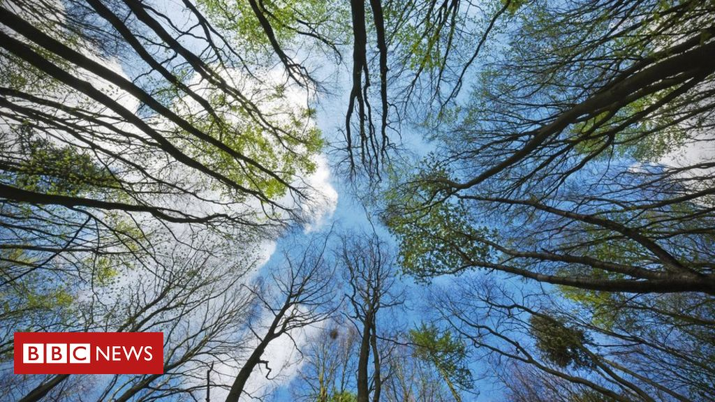 Climate change: UK forests 'could do more harm than good'