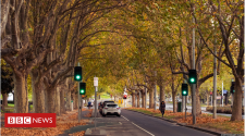 Cities struggling to boost urban tree cover