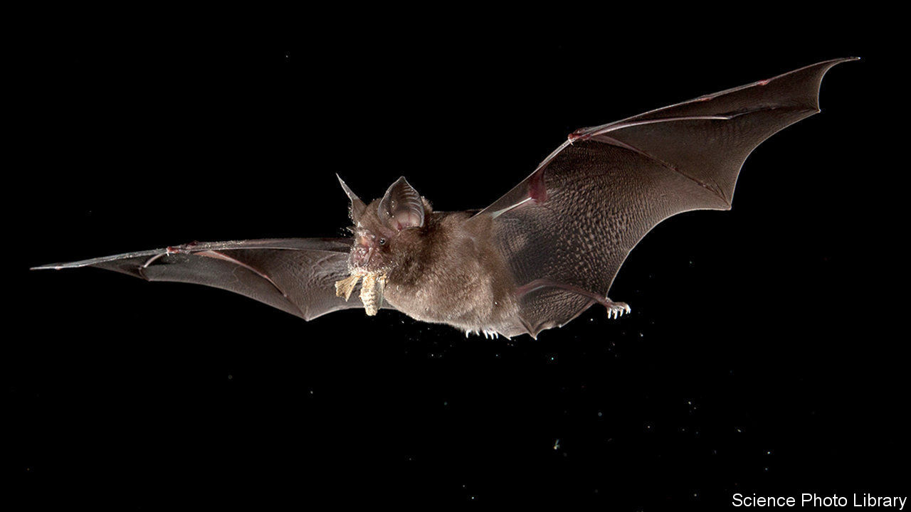 Disease transmission - Bats spread viruses | Science and technology