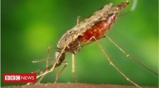 Malaria 'completely stopped' by microbe