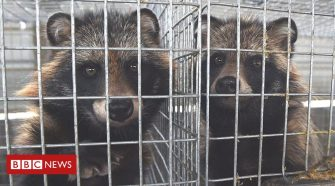 Coronavirus: Calls to shut down 'dirty fur trade'