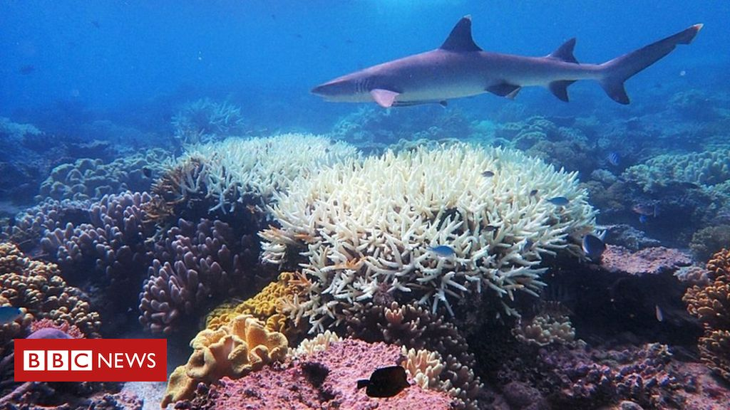 Coral bleaching: Scientists 'find way to make coral more heat-resistant'