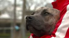 Detroit animal shelters experience record-breaking adoption rates
