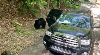 Family finds 4 bears breaking into their car in Gatlinburg