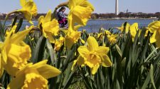 Warmer, less windy Mother's Day follows record-breaking chill in DC area