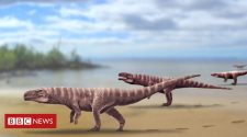 Fossil tracks left by an ancient crocodile that 'ran like an ostrich'