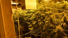 Fremont County Sheriff's Office busts illegal marijuana grow – Canon City Daily Record