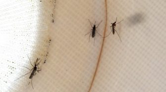 Health officials are treating a northwest Harris County area after West Nile Virus mosquitos discovered Tuesday