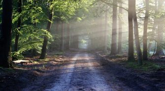 Technology to monitor how trees can mitigate climate change