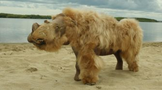 Ancient DNA Suggests Climate Change Behind Woolly Rhino Extinction