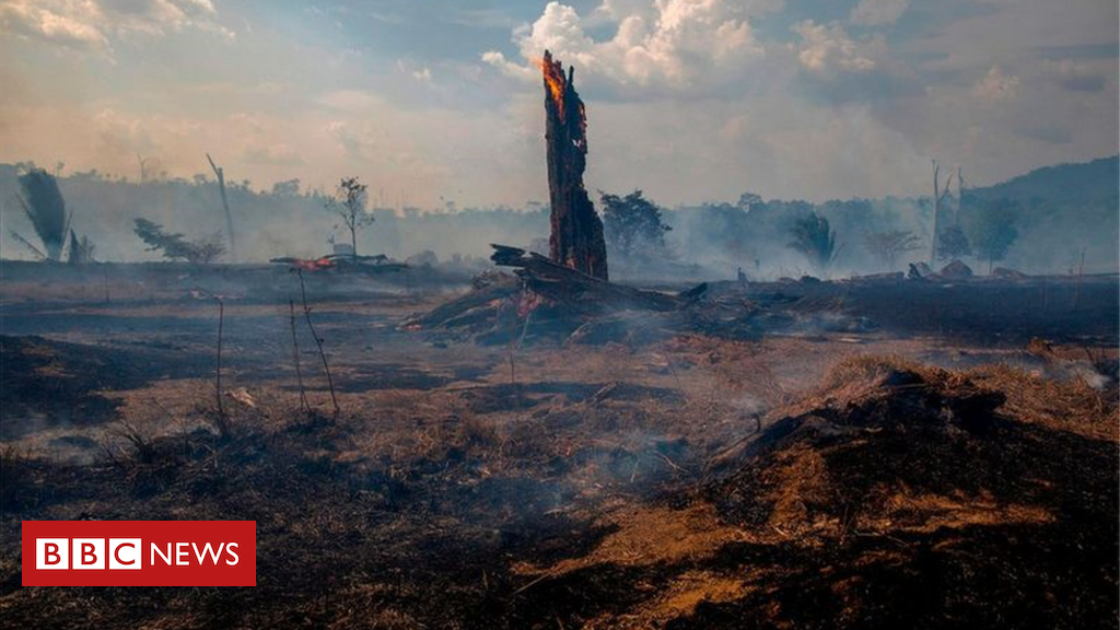 Extinction crisis: World leaders say it is time to act