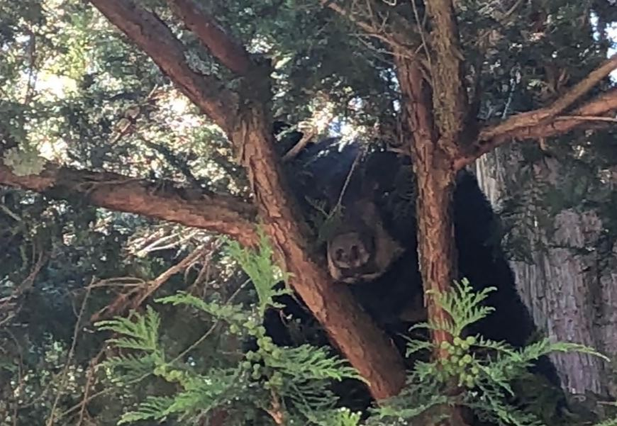 Uptick in Bear Break-ins Across Connecticut – NBC Connecticut