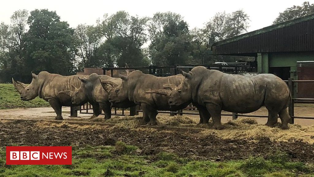 Covid-19: Funding crisis threatens zoos' vital conservation work