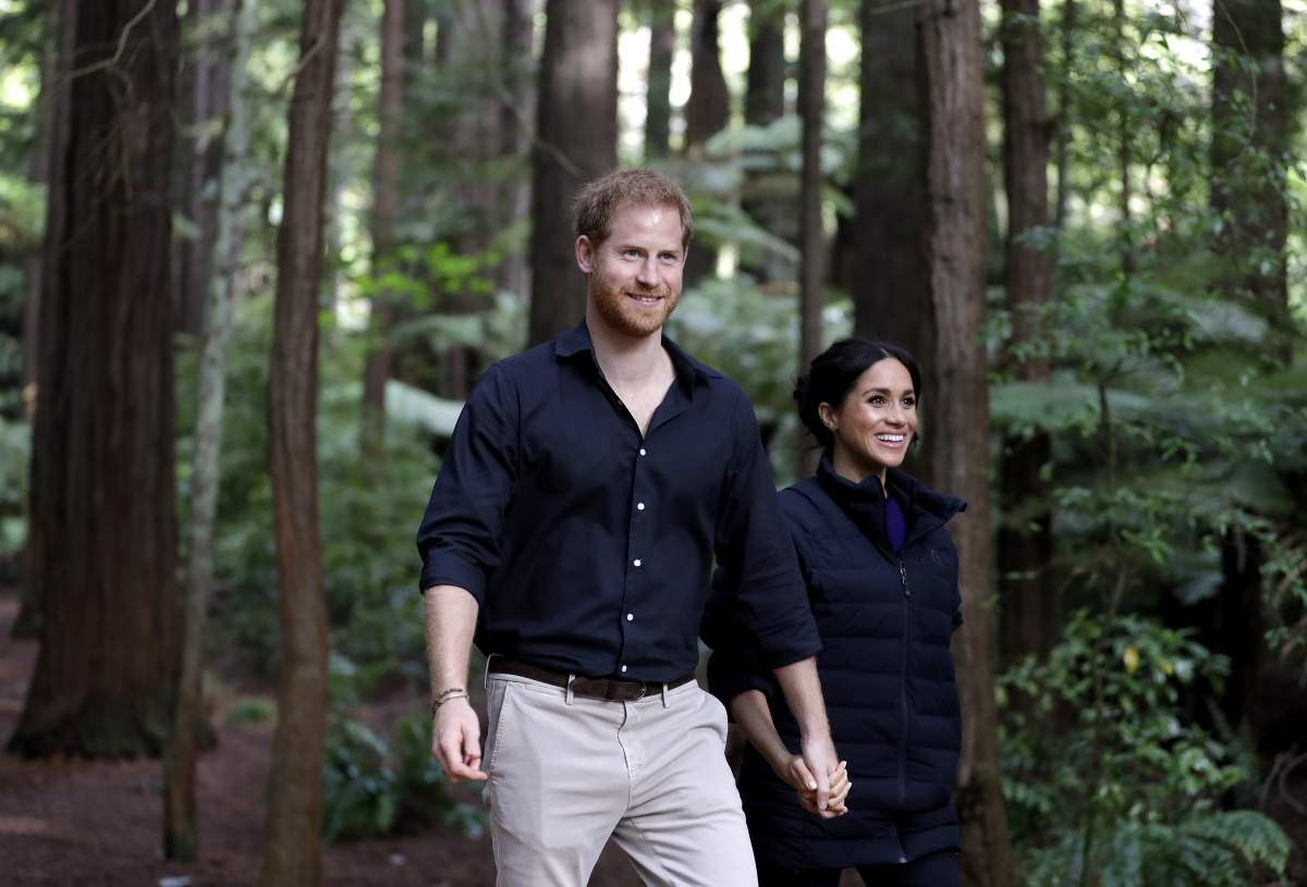Breaking News - Prince Harry and Meghan Markle warned a wild bear is prowling