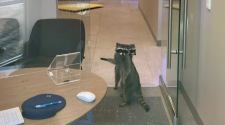Two furry intruders break into bank, steal cookies