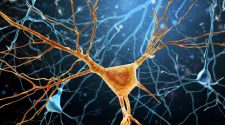 Developing Novel Treatments for CNS Diseases