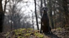 Sequencing Ancient DNA From 27 Dogs, Scientists Unearth Ancient Canine Diversity