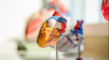Which Genes Are Critical to Human Heart Development?