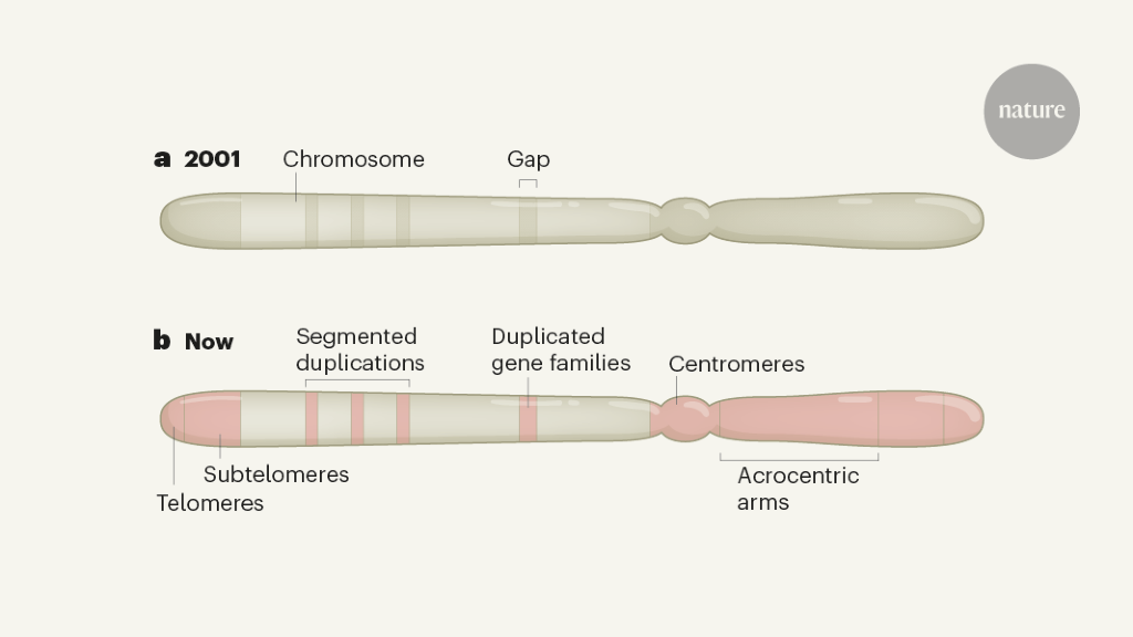Breaking through the unknowns of the human reference genome