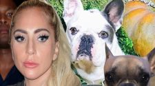 Lady Gaga's Dog Walker Shot, 2 Dogs Stolen, Gaga Offers $500K Reward