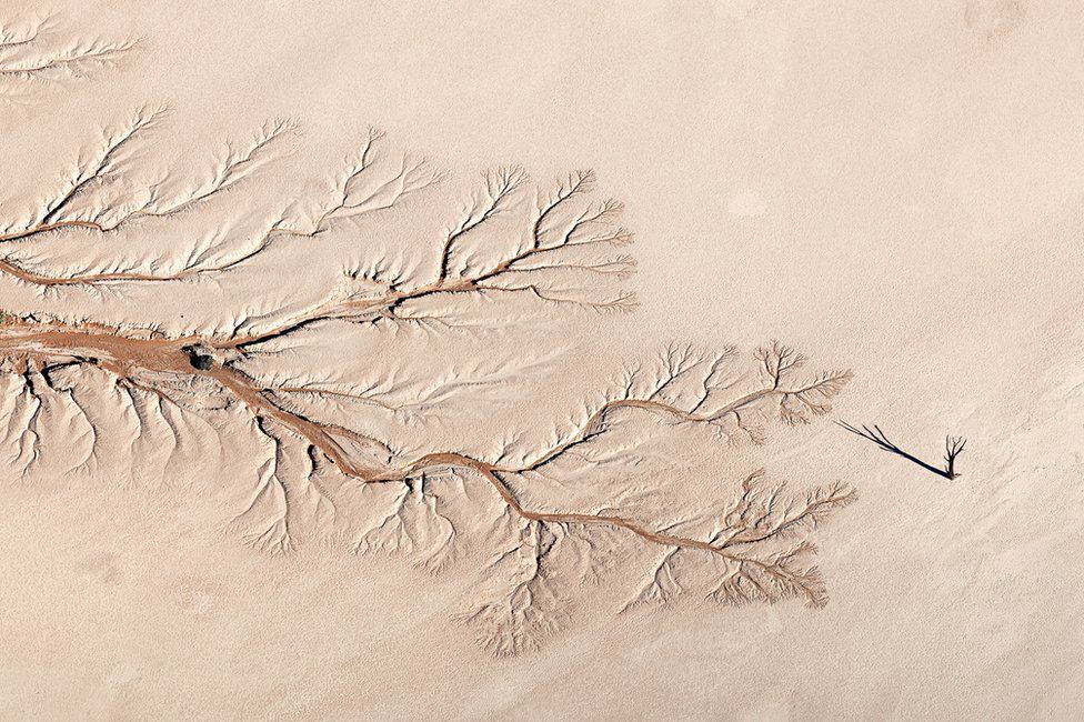 An aerial view of a dried up river bed and a tree
