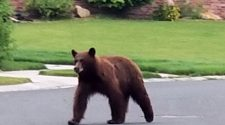Bear caught on camera breaking into Boulder home